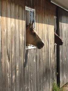 Horse Boarding | Kijiji in Owen Sound  - Buy, Sell & Save with