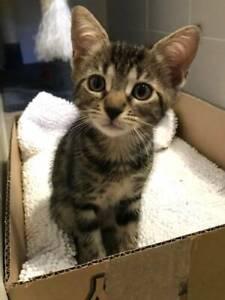 Little Paws Kitten Rescue Rosie