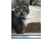 Beautiful Cat found, Canterbury Terrace, off Narborough Road, Leicester LE3, blue collar