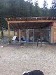 Dog Kennels Penticton Area