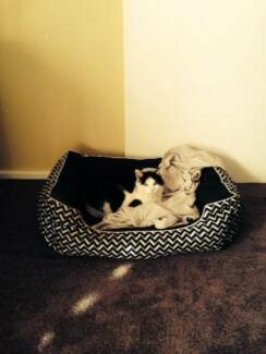 Wanted: Lost black and white female cat - Annie