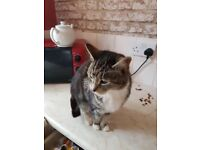 8 yr old female cat needs rehoming