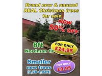 Christmas trees, Nordman fir, NOW 50% OFF, from £9.95 to £24.95