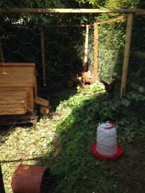 Hen house suitable for 6 hens. 3years old ( not including hens )