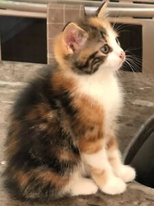 4 kittens looking for a loving home
