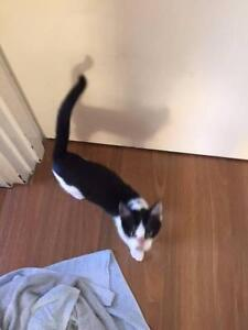 Lovely 3 months old Kitten rescues Taringa Brisbane South West Preview