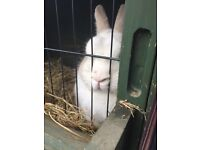 Lovely Rabbit needs a new home