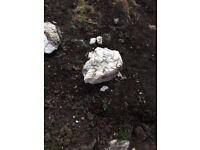 free white rocks collection only