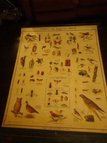 F.L. Washburn Harmful & Beneficial Insect Classroom School Map 1930-40