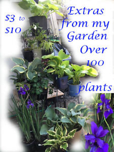 Plants, Perennial and Hostas from my Garden