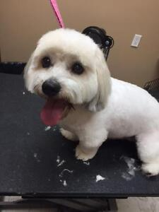 Gentle Paws Dog Grooming
