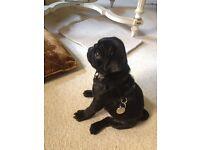 Dog Walking - RBK&C - Mayfair - based in Kensington Nottinghill Gate