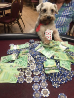 Part-time Poker Dealer - doing it for fun and  money.
