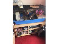 Large Hamster Cage (Barney)
