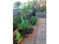 Potted plants and wooden planters, prices vary