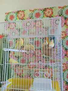 4 canaries and 1  bird cages