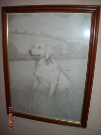 Framed Labrador Sketch