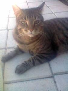 Crazy Cat Lady Misses Her Kitty! $100 Reward. Salisbury North Salisbury Area Preview