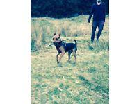 Cardiff Dog Walking - Dog Walker