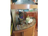 Juwel 350 Aquarium For Sale