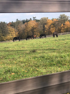 Outdoor Horse Board - 5 Mins to Guelph Line/401 - Campbellville