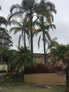 Cocos Palms Gladesville Ryde Area Preview