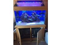 Marine fish tank oak cabinet with pumps filters uv's refugium skimmer razor type led lights