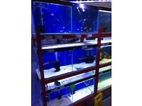 Full Tropical Setup Fish Racks with Aquariums Display Racks tropical fish