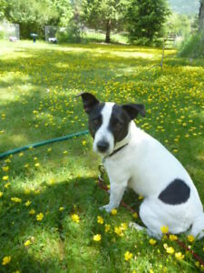 Dog Boarding Wanted Grand Forks or Nelson BC $1500.-