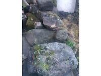 Rockery Stones / Paving Blocks £10 Cash on Collection Strensall, York