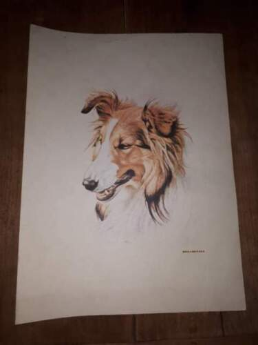 Stampa cane collie