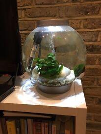 Mature biOrb Baby Aquarium with 4 fish & 1 shrimp