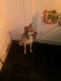 Husky cross 100 or nearest offer