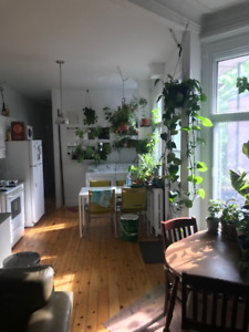 Room in bright sunny and green apartment