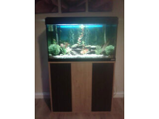 Tropical fish tank plus full set up , fish and cabinet
