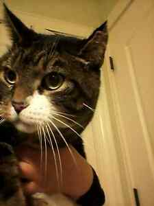 Is this your cat? Found off Penrose