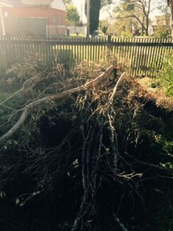 Free firewood Frenchs Forest Warringah Area Preview