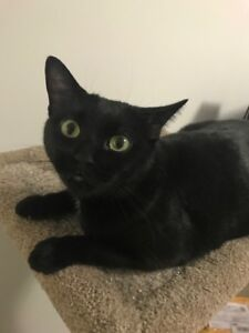Black cat for rehoming *PLEASE READ DETAILS*