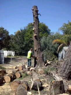 All areas tree services Flagstaff Hill Morphett Vale Area Preview