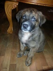 Paws for Love dog rescue has a 8 week puppy  for adoption