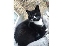 BLACK & WHITE CAT LOST MISSING BRAMLEY LEEDS