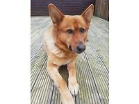 Loving Home Needed For Cash - 4 Year Old Male - Perfect Paws Dog Sanctuary