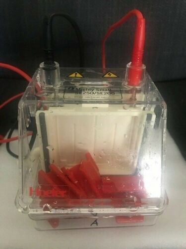Hoefer Mighty Small SE250 Mini Vertical Electrophoresis Unit