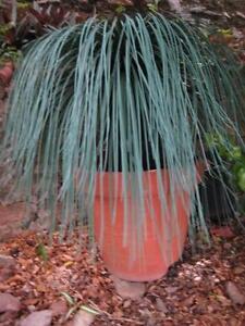 Artificial or Fake PLANT Hamilton Brisbane North East Preview