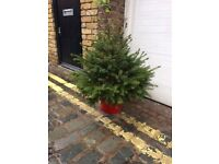 Potted 3 ft Christmas Tree