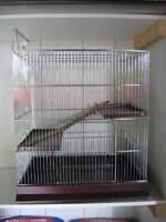 Cage Chinchillas