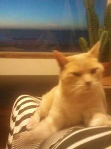 Kitty Kamp Cat Boarding Camden Park West Torrens Area Preview