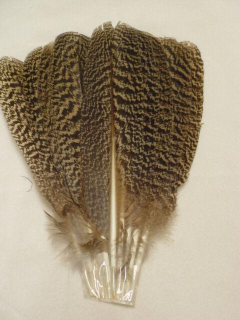 Rare Peacock Mottled Ten Feather Wing Fan Set  w/ Wooden Fan Holder  #BF36