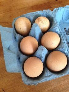 Fertile Guinea Fowl eggs $10 per half dozen Sheldon Brisbane South East Preview