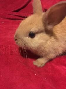 4 month old rabbits to be rehomed Tweed Heads Tweed Heads Area Preview